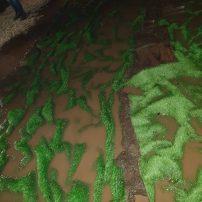lucca comics tappeti verdi